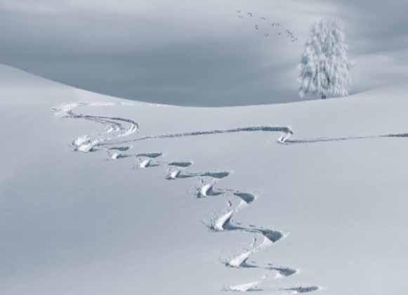 Empty Ski Trail