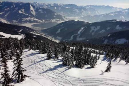 A snow slope with trees and ski tracks